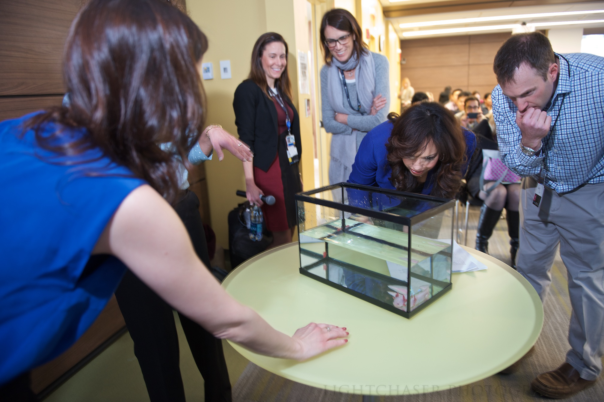 After a panel about regenerative medicine, attendees check out a salamander, which can regrow lost limbs, from Jessica Whited's lab.