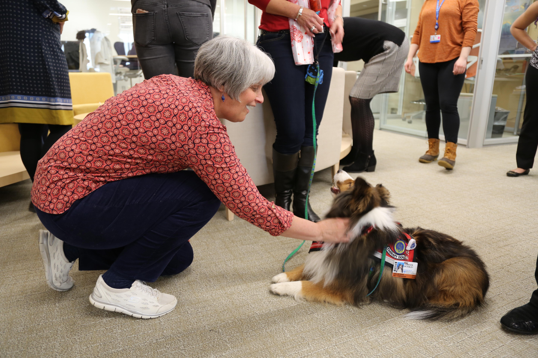 Employee kneeling down to pet shetland sheepdog.
